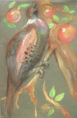 Райская птица.