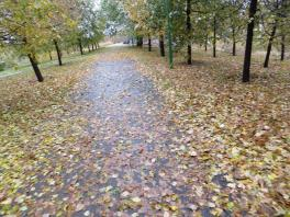 Листопад, листопад, листья жёлтые летят!