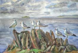 Маломорские чайки.