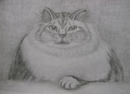 Любимый кот - Маркиз