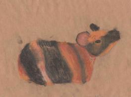 Морская свинка. Набросок
